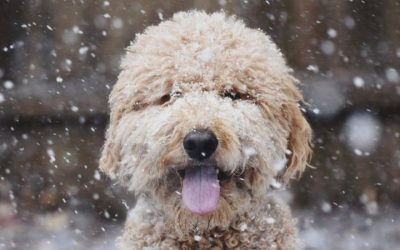 Animals in the snow: Top tips to keep pets safe in winter